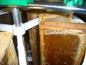 honeyextracting